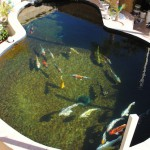 Koi pond using ERIC Threes producing crystal clear water for pond