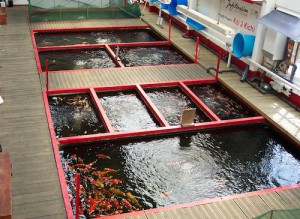 Showing the koi ponds at infiltration peter waddington