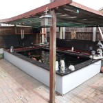 Koi Pond with pergola for overhead protection