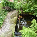 Beautiful 4000 Gallon pond with koi and surrounding foliage