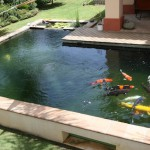 Marco Koi Pond testimonial for ERIC Filters