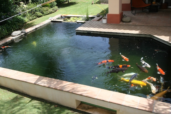 Image gallery koi pond filters for Square fish pond