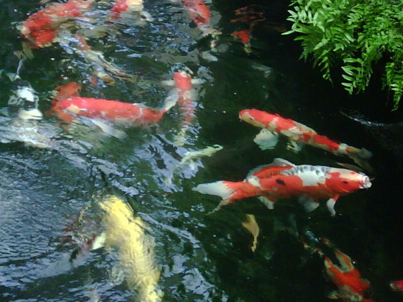 Eric koi pond filtration happy birthday to eric for Koi ponds near me