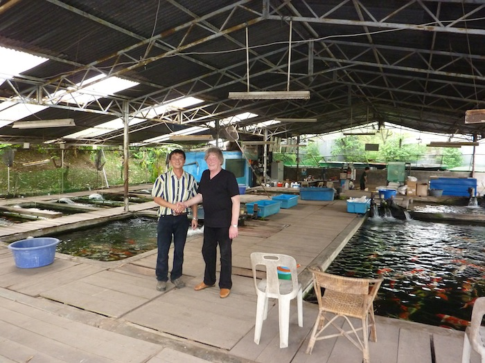 Eric koi pond filtration eric update for Koi dealers near me