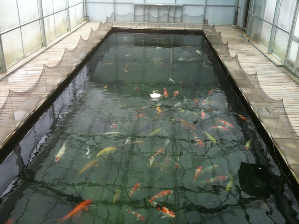 Eric koi pond filtration large koi pond in usa for How much to build a koi pond