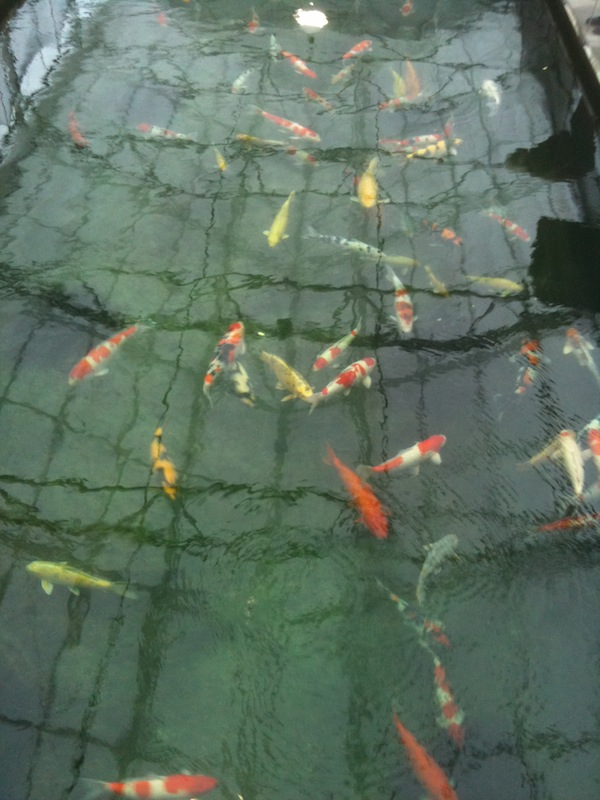 Eric koi pond filtration large koi pond in usa for Giant koi pond
