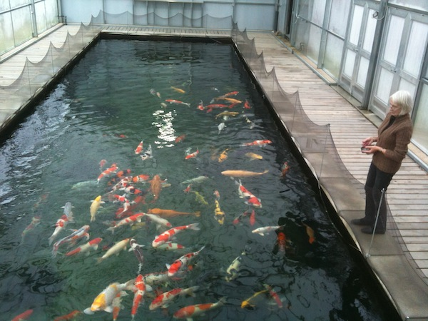 Eric Koi Pond Filtration Large Koi Pond In Usa