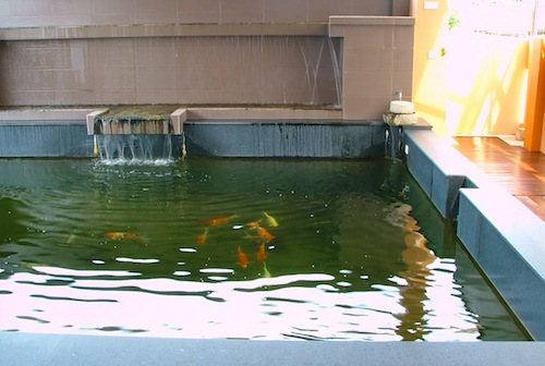 Koi Pond filtered by ERIC Units