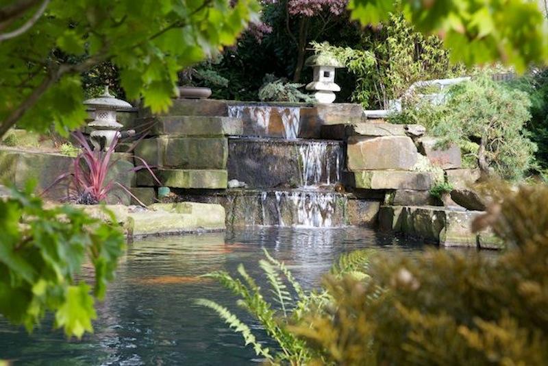Peter Waddingtons Pond 1