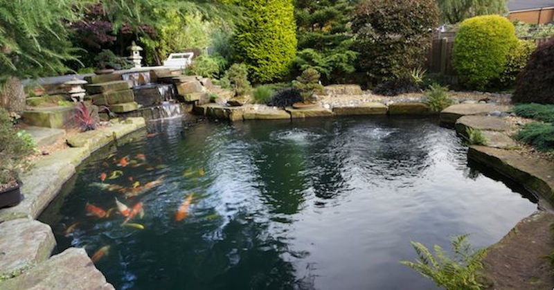 Peter Waddingtons Pond 3