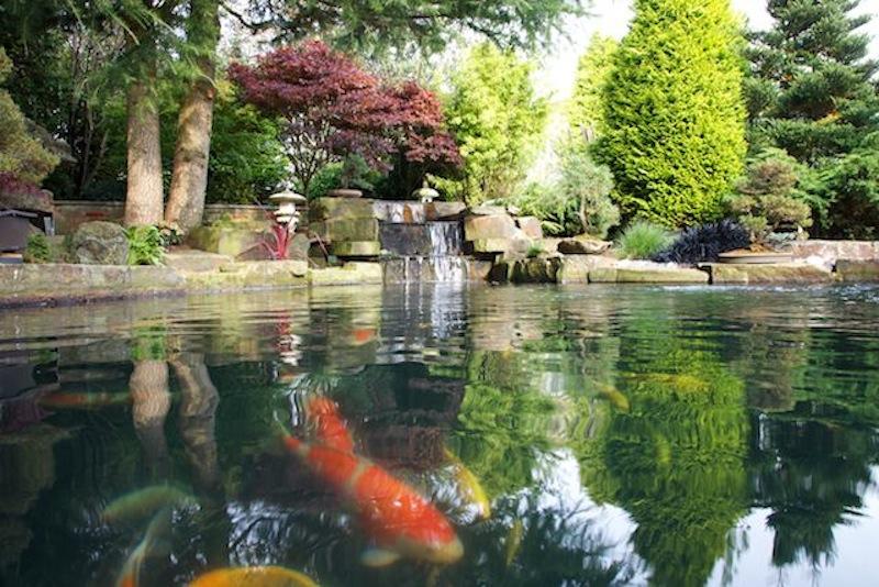 Peter Waddingtons Pond 5