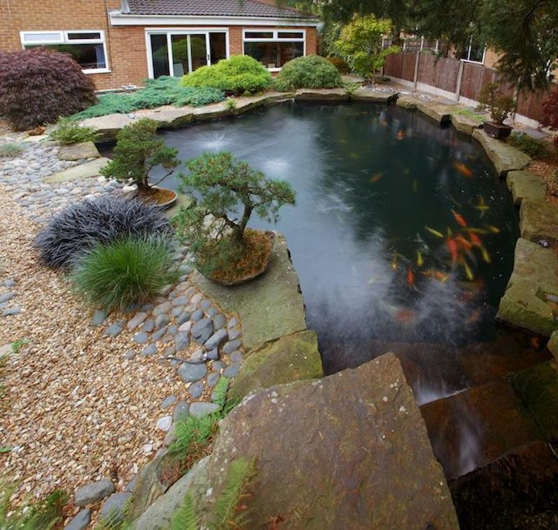 Peter Waddingtons Pond 6