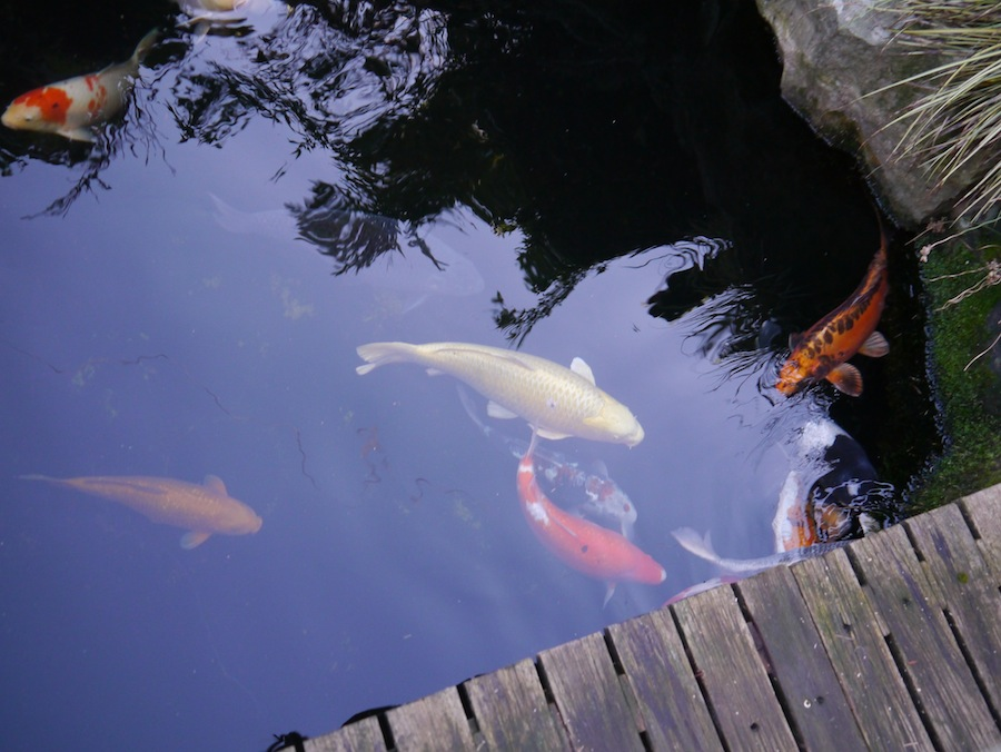Gravity feed filter koi for Koi pond jets