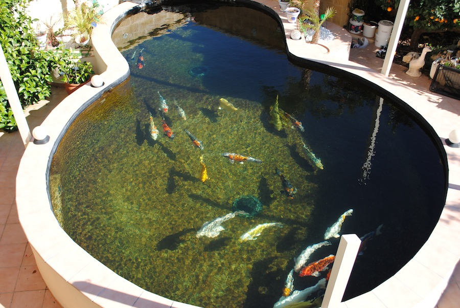 I had many different reasons for designing and producing for Koi pool filters