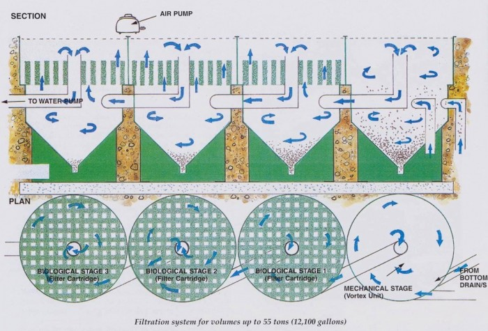 Biological upward flow filtration revisited eric koi for Pond filter system design