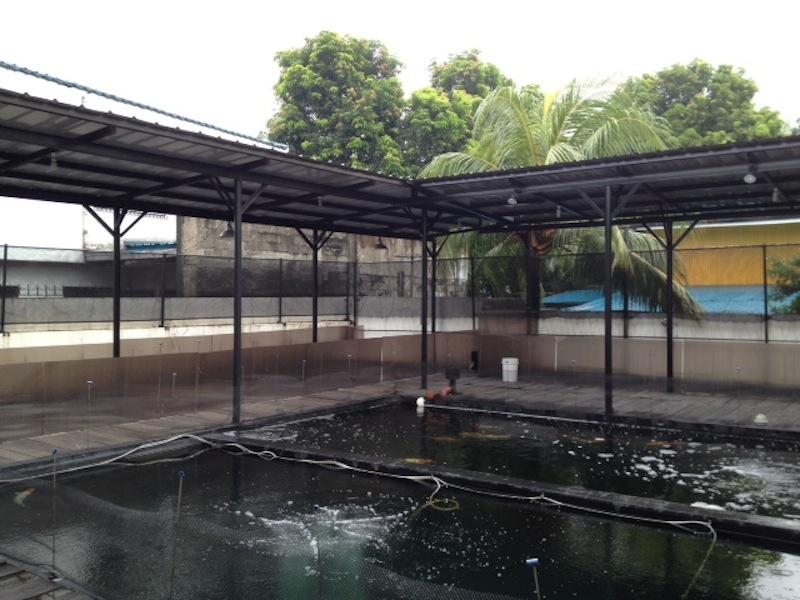 Koi Hob ERIC Distributor ponds